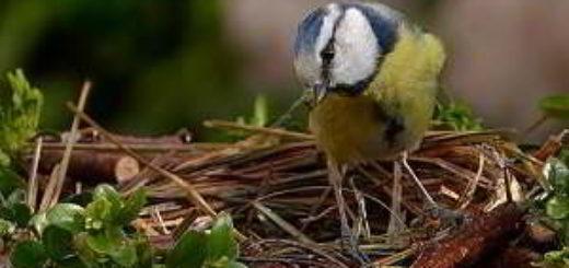 पंछी पर कविता - पंछी एक प्रेरणा | An Inspirational Hindi Poem On Birds