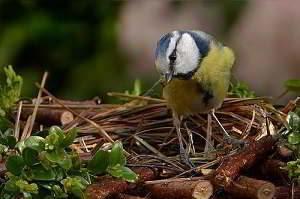 पंछी पर कविता
