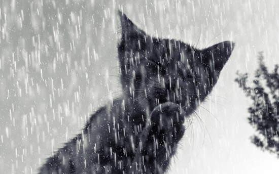 बारिश में भीगने से बचने के कुछ बहुत ही आसान और मजेदार तरीके