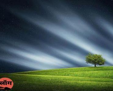 पेड़ पर हिंदी कविता