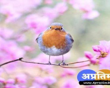 हिंदी कविता जीवन एक सीख