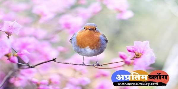 जयकरी छन्द - चिड़िया आकर बैठी डाल