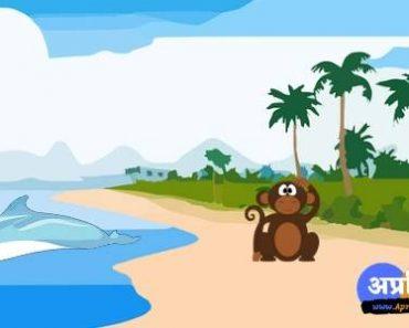 झूठबोलने का परिणाम कहानी :- बंदर और डॉलफिन की शिक्षादायक कहानी