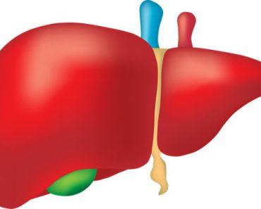 Liver Information In Hindi | लीवर के बारे में 20 रोचक जानकारी